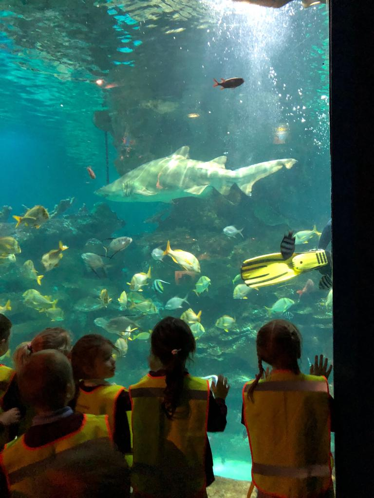 Our Trip to The Blue Planet Aquarium